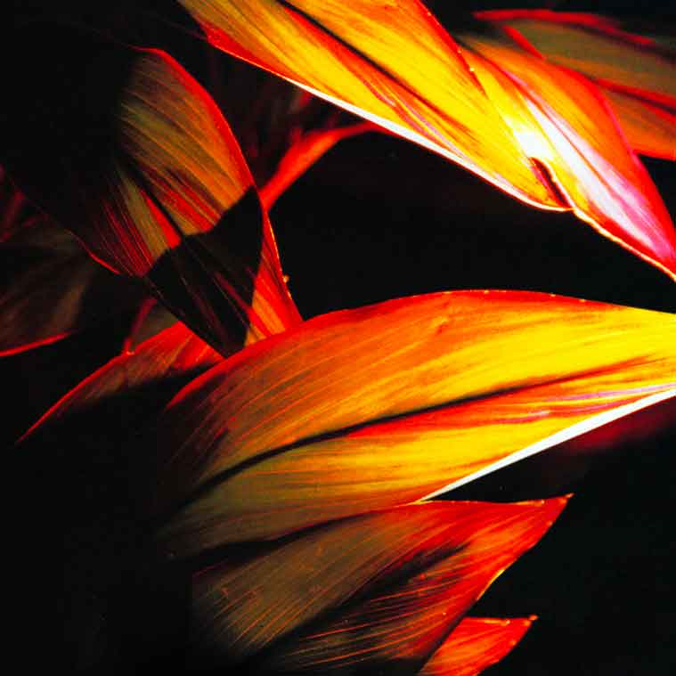 Leaves with abstract lighting | Outdoor Lighting Services Landscape Florida